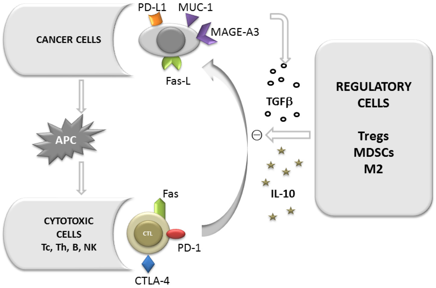 The Role Of The Immune System In Non Small Cell Lung Carcinoma And